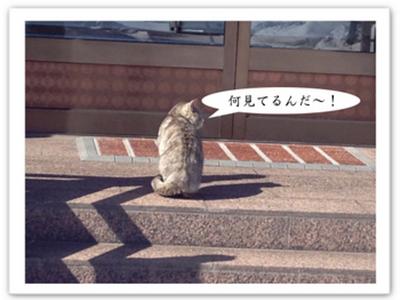 日向ぼっこ猫.jpg